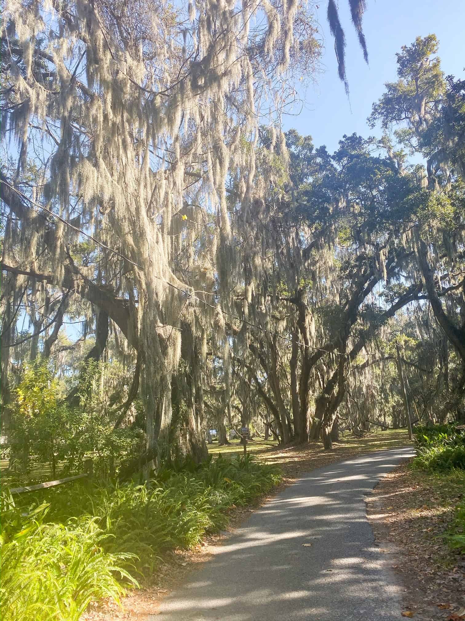 Behind The Scenes Draper James Trip by popular Dallas fashion blog, Glamorous Versatility: image of oak trees covered in Spanish Moss.